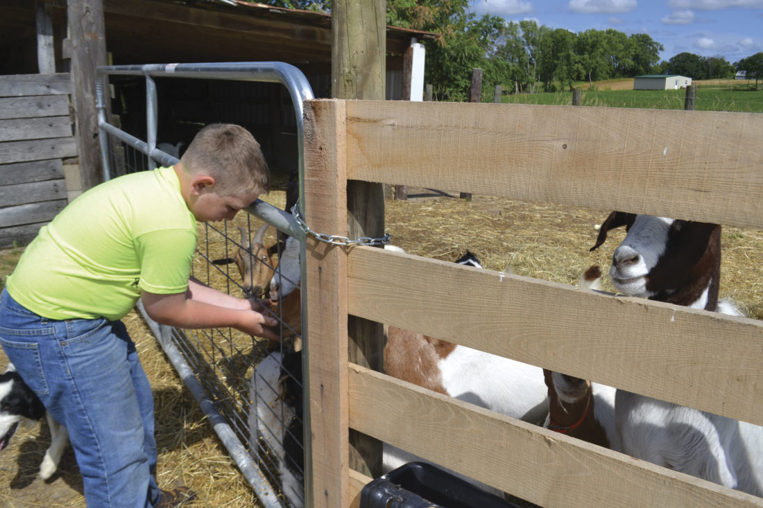 Photo by Peyton Neely Mason Antill, 11, feeds goats at Pampered Pets Petting Farm.