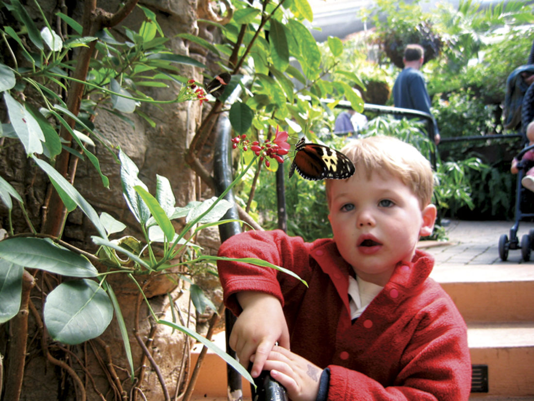 Photo courtesy ExperienceColumbus.com A boy looks at a butterly at the Franklin Park Conservatory.