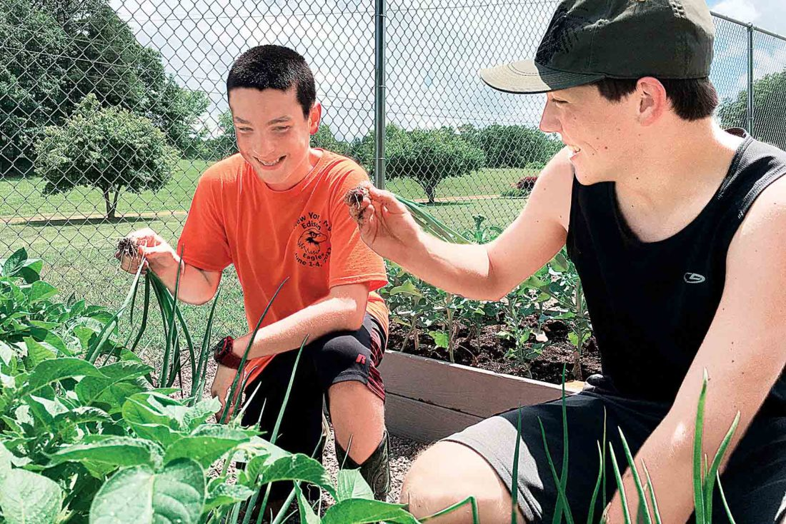 Photo by Michael Erb Edison Middle School eighth-grader Ethan Hall, left, and Parkersburg South High School ninth-grader Hunter Midcap, right, pull onions Thursday at Edison's Community Garden. The garden is part of a science, technology, engineering and mathematics program at the school.