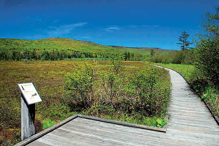 Photo courtesy of the West Virginia Department of Tourism Within the Cranberry Glades area, there is a 0.5-mile boardwalk which moves along the edge of bogs and a small wooded area.