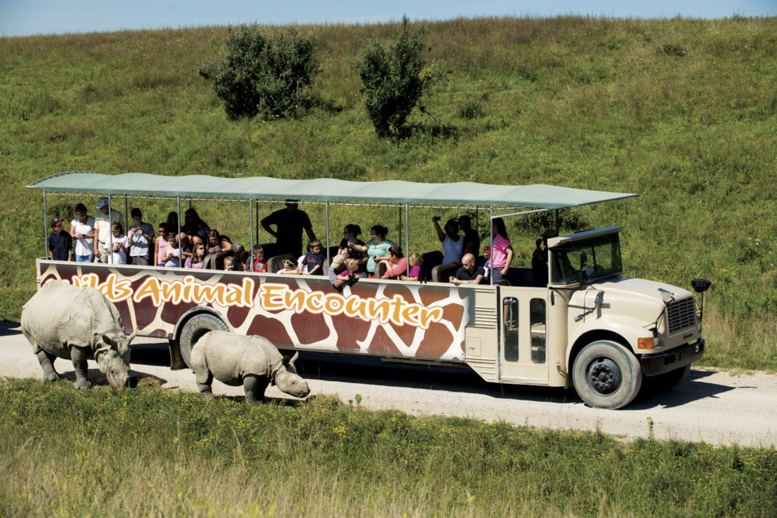 Photos provided by The Wilds Patrons take part in an open-air safari.