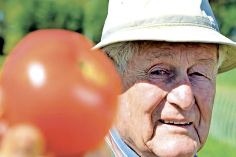 Photo Provided Mannon Gallegly, professor emeritus of plant pathology at West Virginia University, holds his 1963 tomato, dubbed the people's tomato.