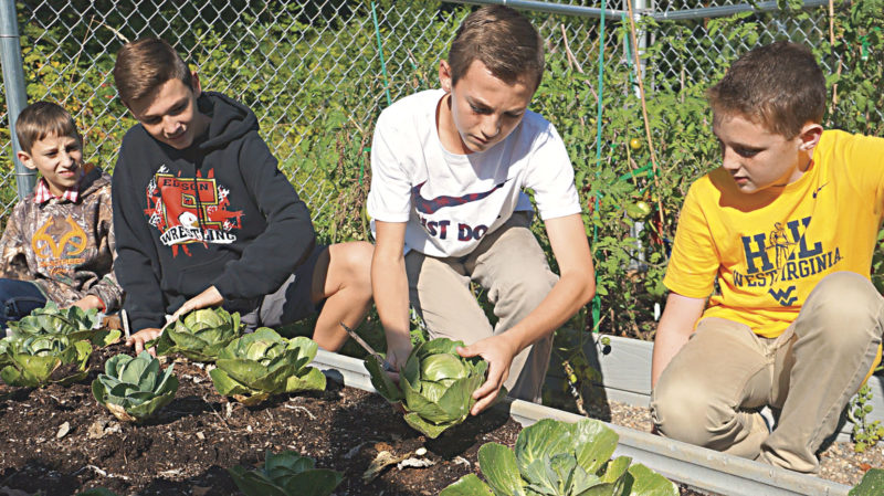 Photo by Michael Erb Edison Middle School sixth-grader Trenton Byrd, left, and eighth-graders Logan Ford, center left, Hayden Coull, center right, and Caleb Lucas, right, begin harvesting cabbage Friday at the school's student-run community garden.