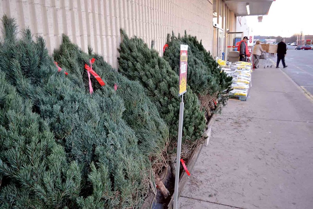 Photo by Michael Kelly Shoppers leave the Marietta K-Mart as a Salvation Army worker rings his bell and a line of Christmas trees waits for buyers on Friday. The day has been in the past the first day of holiday shopping, but many stores started offering bargains well before Thanksgiving Day this year.