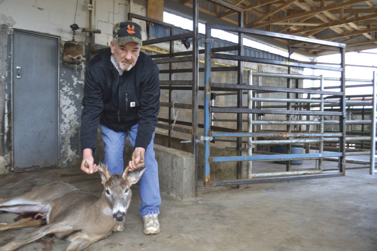Photo by Michael Kelly    Dave Pottmeyer at Hickory Hill meat processors kneels next to a deer brought in for processing.