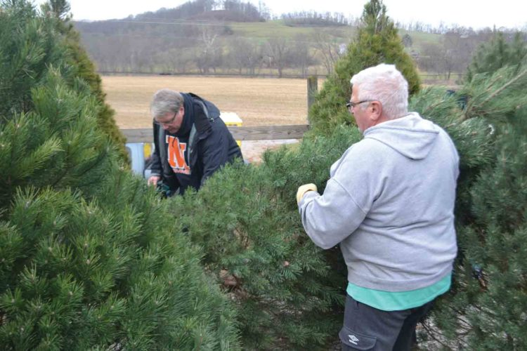 Jim Roberts, left,  and Bob Morrison, owner of  Caywood Christmas Tree Farm, move a freshly cut Christmas tree after Roberts chose the tree for his home.  The farm northeast of Marietta has been selling locally grown trees for 25 years. (Photo by Michael Kelly)