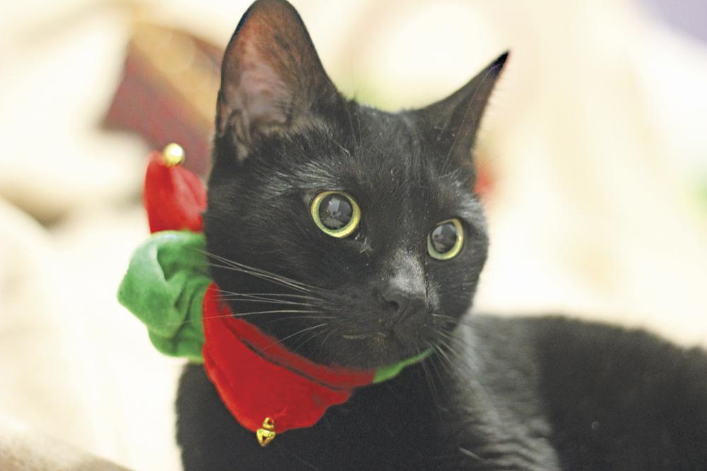 Humane Society Fix A Cat