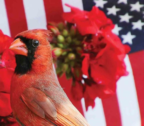 The photo of the cardinal by Sharon Carper of Parkersburg was purchased by Wild Birds Unlimited for its advertising and marketing. (Photo Provided)