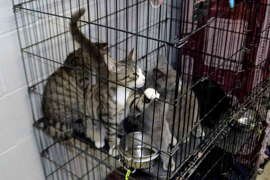 Image of: Houston An Enclosure Filled With Cats Sits On The Floor Of The Entry Hallway Tuesday At The Humane Society Of The Ohio Valley Animal Shelter On Mount Tom Road Humane Society Of The Ohio Valley Animal Shelter Full News Sports