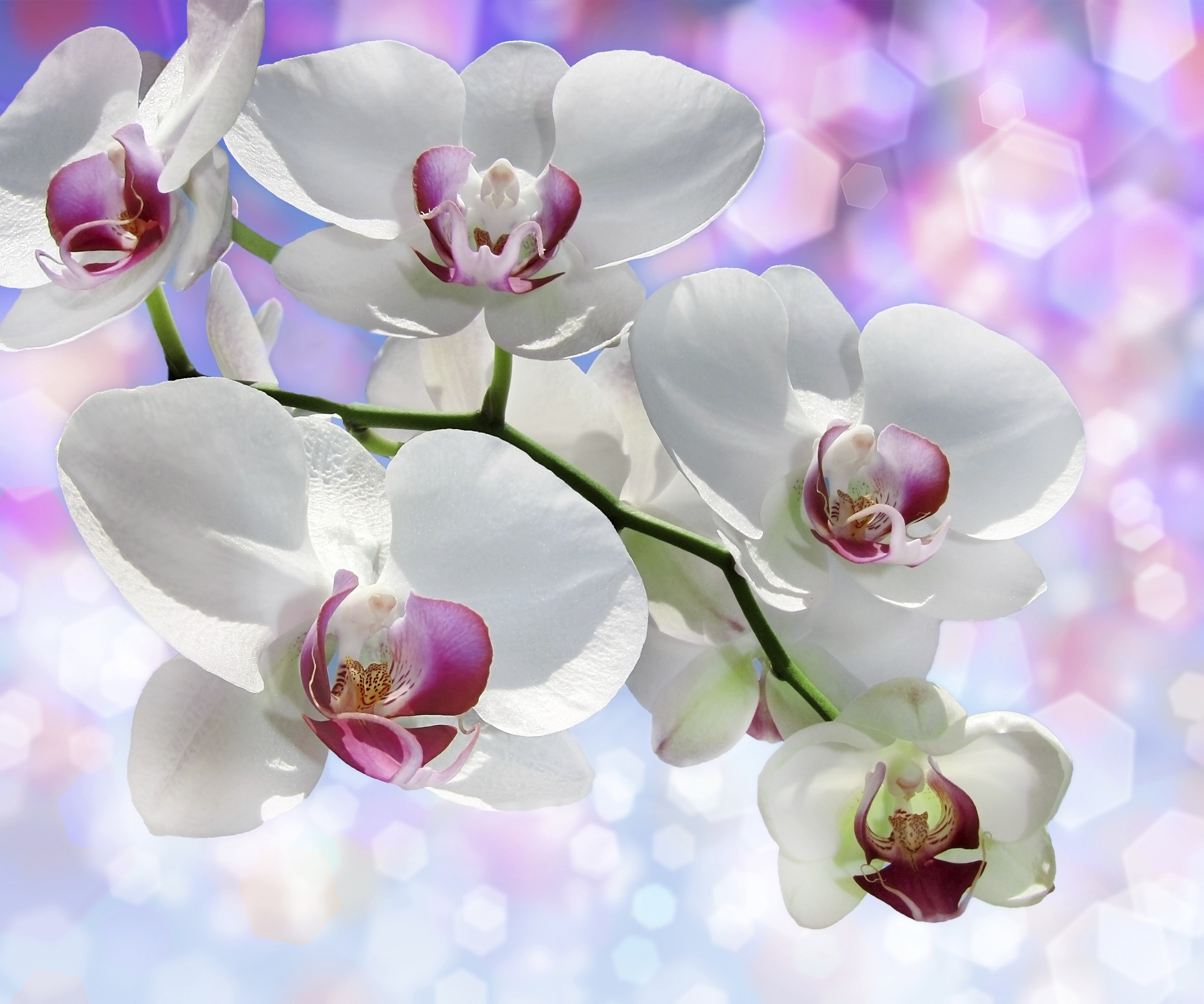 Win Tickets to Orchid Fantasy Escape: Valentine's Day Flowers and Gifts, Speakers & More