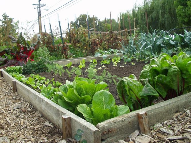 """Now is a good time to get """"cool-season"""" plants like lettuce, cabbage, broccoli, brussels sprouts and onions planted for a good start on Minnesota's short growing season, according to Brown County Master Gardeners. Warm weather plants like tomatoes and peppers can be started inside and planted closer to the end of May when the soil and weather warms up."""