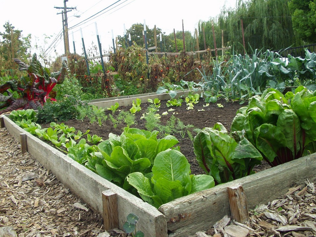 now is a good time to get cool season plants like lettuce - Vegetable Garden Ideas Minnesota