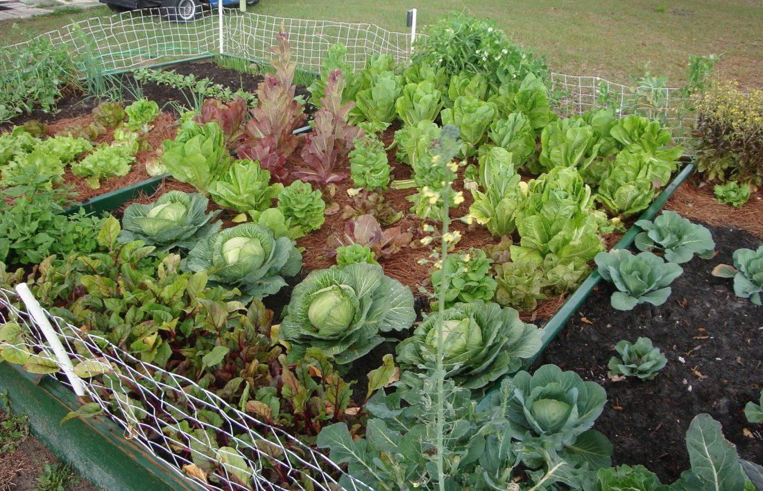 vegetablegarden2