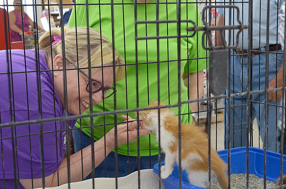 Tammy Sellner pets the kitten named Red Velvet during the Brown County Humane Society's Kitten Shower Friday at Runnings Farm & Fleet store in New Ulm.