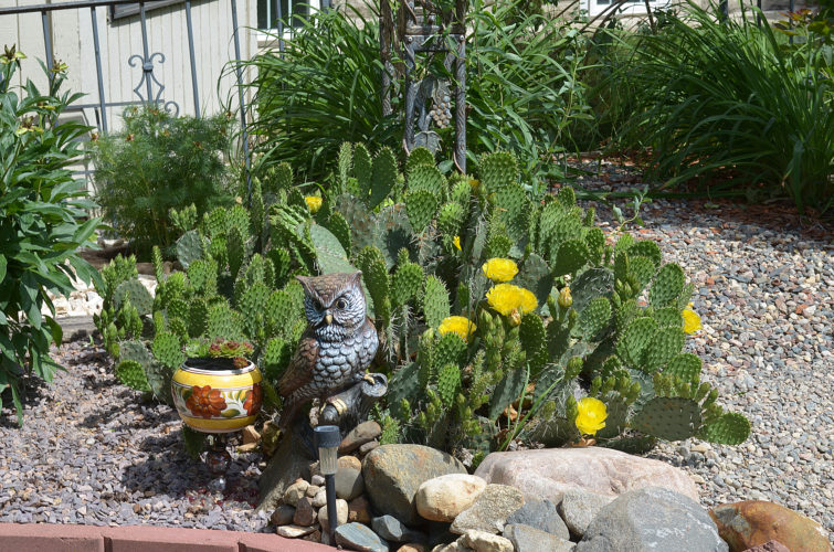 Jane Baker turned a backyard lacking any shrubbery or trees into a large, serene garden, including these brightly flowering cacti.