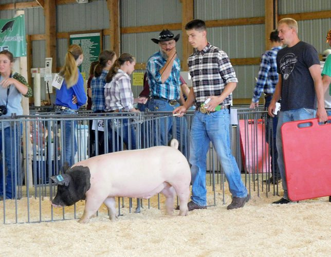 Staff photo by Clay Schuldt Jordan Kieper showed a hog in the Brown County 4-H swine show Saturday at the fairgrounds.