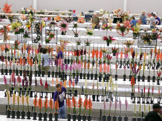 "Photos by Clay Schuldt The Minnesota Gladiolus Society return to the Brown County Fair. The theme of this year's show was ""The County Fair."" Judges reviewed hundreds of flowers in a variety of category. A people's choice category was also open to public voting on Saturday."