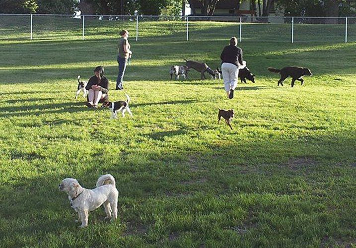 Photo submitted Dogs play off-leash with their owners at the Happy Tails Dog Park in New Ulm. It would be the only park in New Ulm where dogs could be off-leash under regulations being considered by the New Ulm City Council.