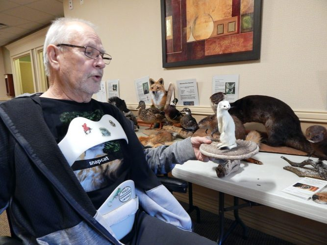 Since Riverside History & Learning Center Curator Ron Bolduan is recovering from back surgery at Oak Hills Living Center, a number of river critter mounts and pelts are on display outside his room. Above, Bolduan holds one of his friends, a mink outside his room at Oak Hills.