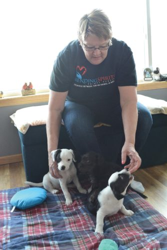 Staff photo by Connor Cummiskey  Animal foster Deb Roiger with Mending Spirits Animal Rescue is fostering three English bulldog/Shi Tzu mixes named, from left to right, Barney, Swarley and Ted.