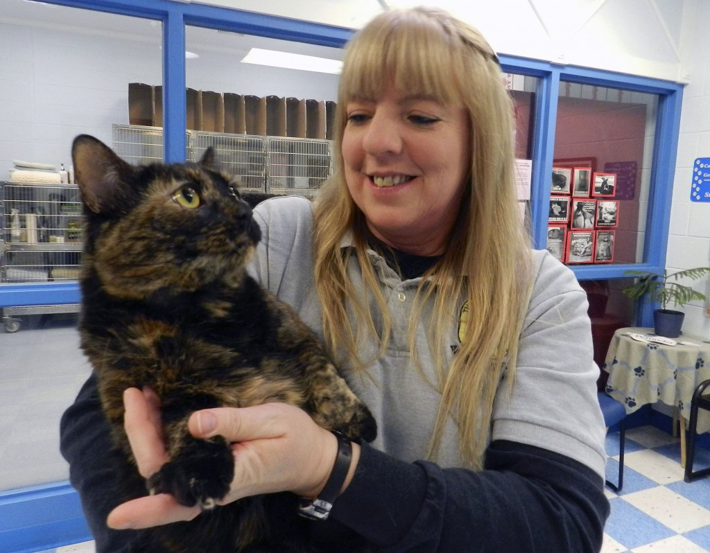Jenny Wright, manager of the Clarke County Animal Shelter in Berryville, holds a tortoiseshell cat named Tea, that is up for adoption.  Josette Keelor/Daily