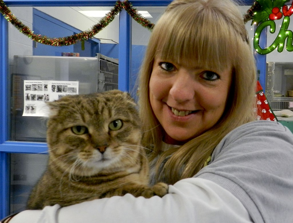 Jenny Wright, manager of the Clarke County Animal Shelter in Berryville, holds Martha, a 2- to 4-year-old brown tabby found this summer at a vineyard east of Berryville. Martha is in good health but has cauliflower ears after suffering ear infections that went untreated.  Josette Keelor/Daily