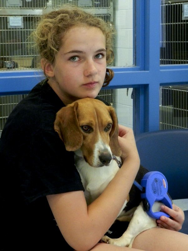 Clarke County Animal Shelter volunteer Cynthia Fairbanks, 13, holds a 1 1/2-year-old beagle named Gremlin.   Josette Keelor/Daily