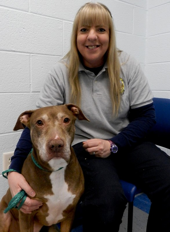 "Jenny Wright, manager of the Clarke County Animal Shelter in Berryville, sits with Louise ""Weezy,"" a 6- to 7-year-old pit bull mix up for adoption.  Josette Keelor/Daily"