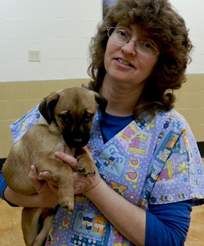 Darlene Foreman, caretaker at Esther L. Boyd Animal Shelter, shows off camera-shy Oliver the puppy.  Henry Culvyhouse/Daily