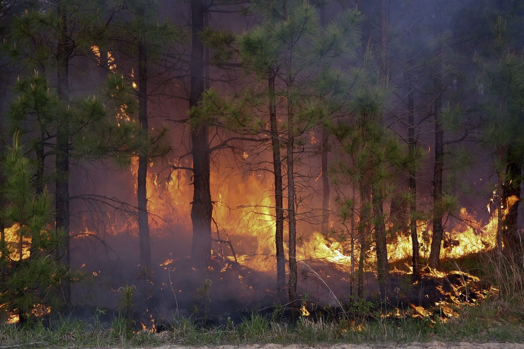 Virginia's spring wildfire season runs through April 30, and the state's burn law is now in effect.  This photo is of a wildfire that occurred in 2005 in the counties of Dinwiddie and Nottoway. Courtesy photo by the Virginia Department of Forestry