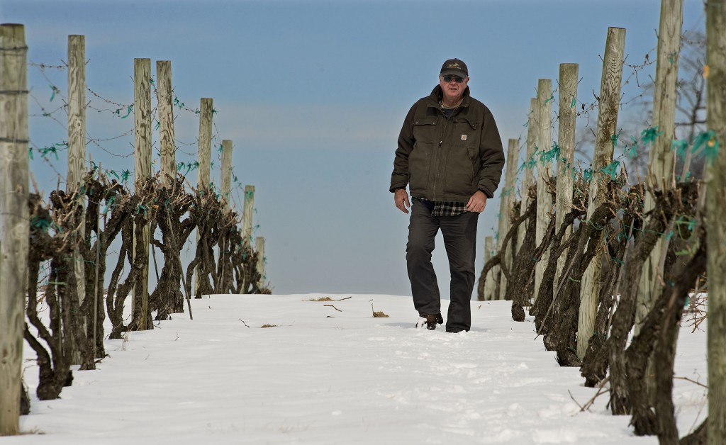 Brad Foster, an owner and vineyard manager for North Mountain Vineyard in Maurertown, walks through a row of cabernet franc grape vines outside the vineyard on Wednesday. Foster says there has been no cold weather damage to the vines so far this season, but area vineyard owners have expressed concerns. Experts say that 2015 damage  should prove less than 2014.  Rich Cooley/Daily