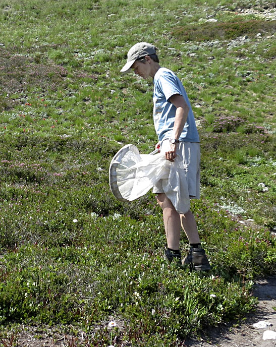 Jessica Rykken, associate researcher at Harvard University, works on capturing bees for research in North Cascades National Park in the state of Washington.  Rykken will be studying pollinators in Shenandoah National Park this summer. Courtesy photo by Gina Rochefort.