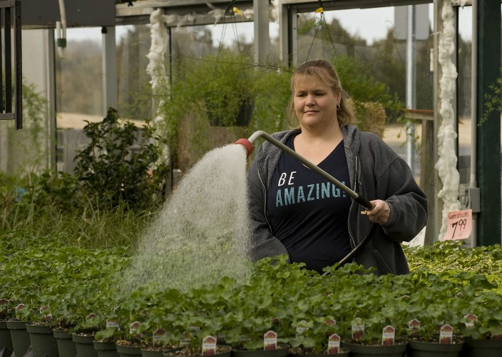Becky Stotler, a manager at Horton's Nursery in Winchester, waters a group of geraniums inside their greenhouse south of Winchester recently. These plants will be blooming in a couple weeks, giving homeowners a hearty dose of color in their yards.  Rich Cooley/Daily