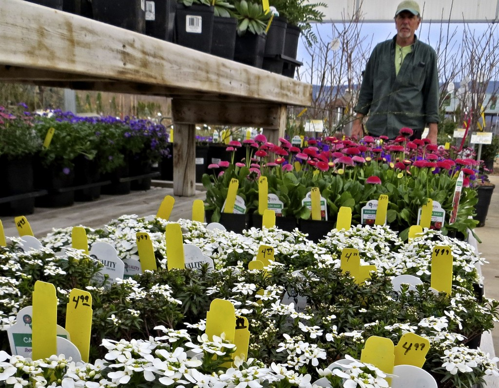 """Flats of new spring flowers are displayed at Fort Valley Nursery in Woodstock. Owner Terry Fogle said the nursery carries a """"fairly large amount"""" of plants localized for this area.   Courtesy photo"""