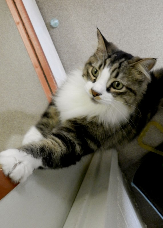 Ace hangs out in the visiting room at the Winchester SPCA Animal Shelter. Photo by Henry Culvyhouse