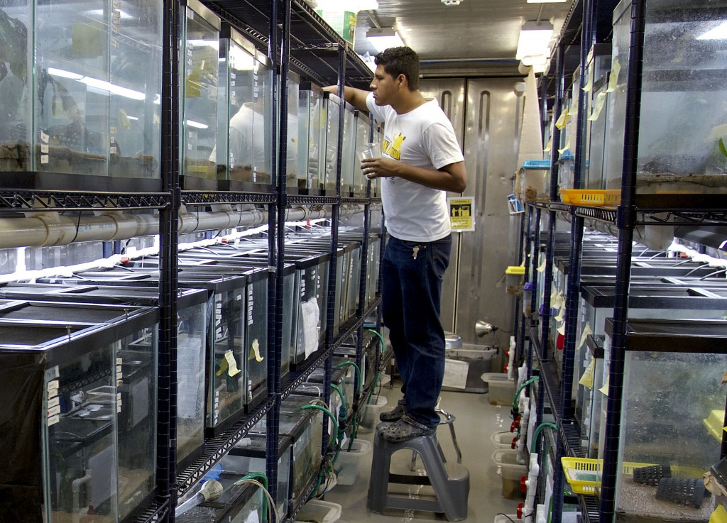 Jorge Guerrel, a conservation biologist with the Smithsonian Conservation Tropical Institute, works on the frogs in one of the research pod shipping containers.  Photo courtesy of the Smithsonian