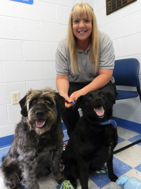 Jenny Wright, shelter manager at the Clarke County Animal Shelter in Berryville, sits with Bear, left, and Boomer,  6 1/2-year-old terrier-black Lab mixes. Surrendered by their owner last month, the dogs are litter mates and best buddies who should not be separated.  Josette Keelor/Daily