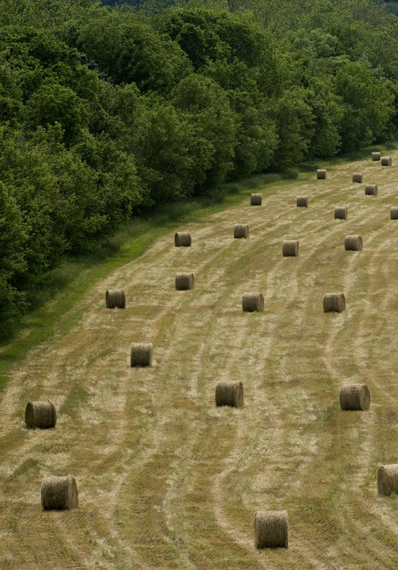 Rolls of hay bales line this field along the South Fork of the Shenandoah River near the bridge in Front Royal after a rain shower Wednesday afternoon. Area hay harvests have been bountiful this spring.   Rich Cooley/Daily