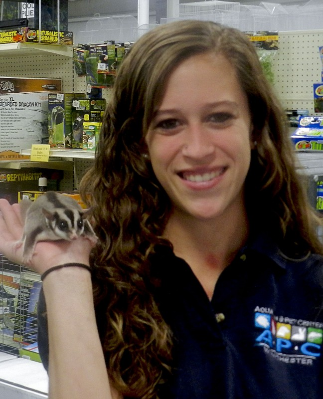 Christine Renner, of the Winchester Aquarium and Pet Center, holds her pet sugar glider, Clementine.   Kevin Green/Daily
