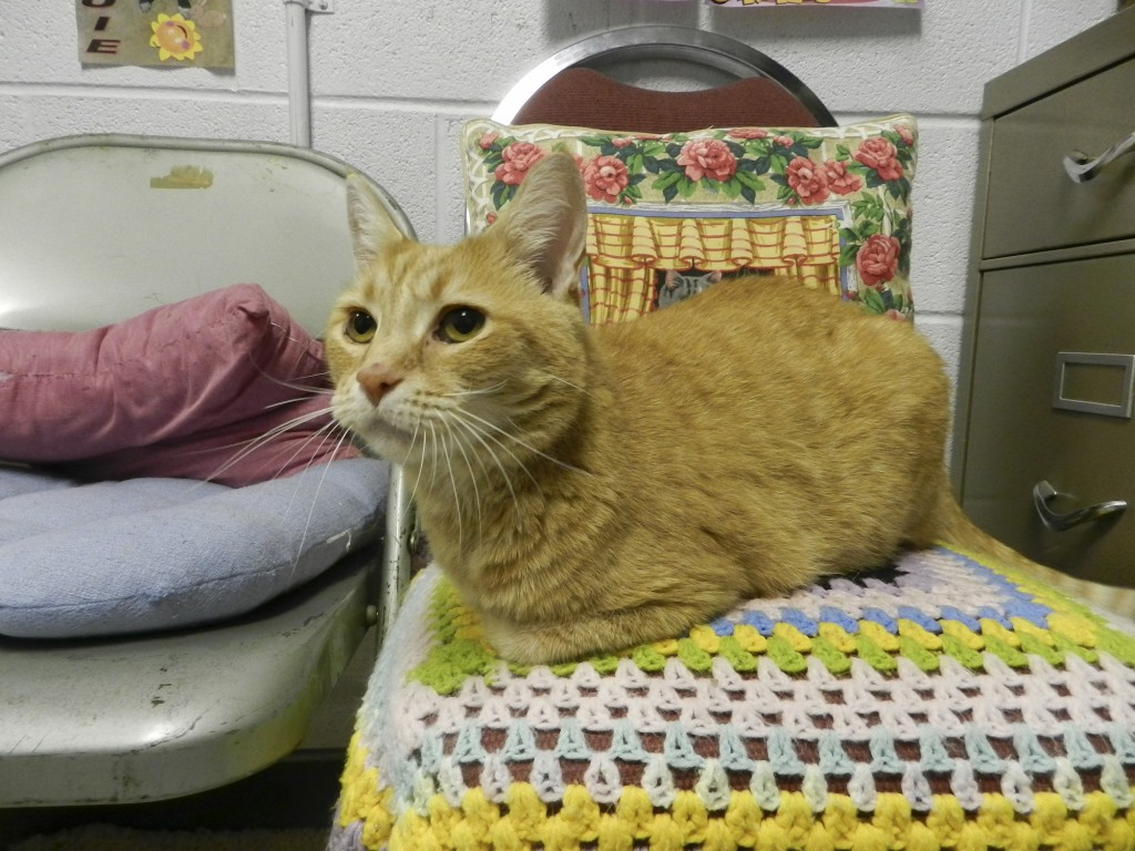 Waffles is looking for a forever home. Rachel Mahoney/Daily