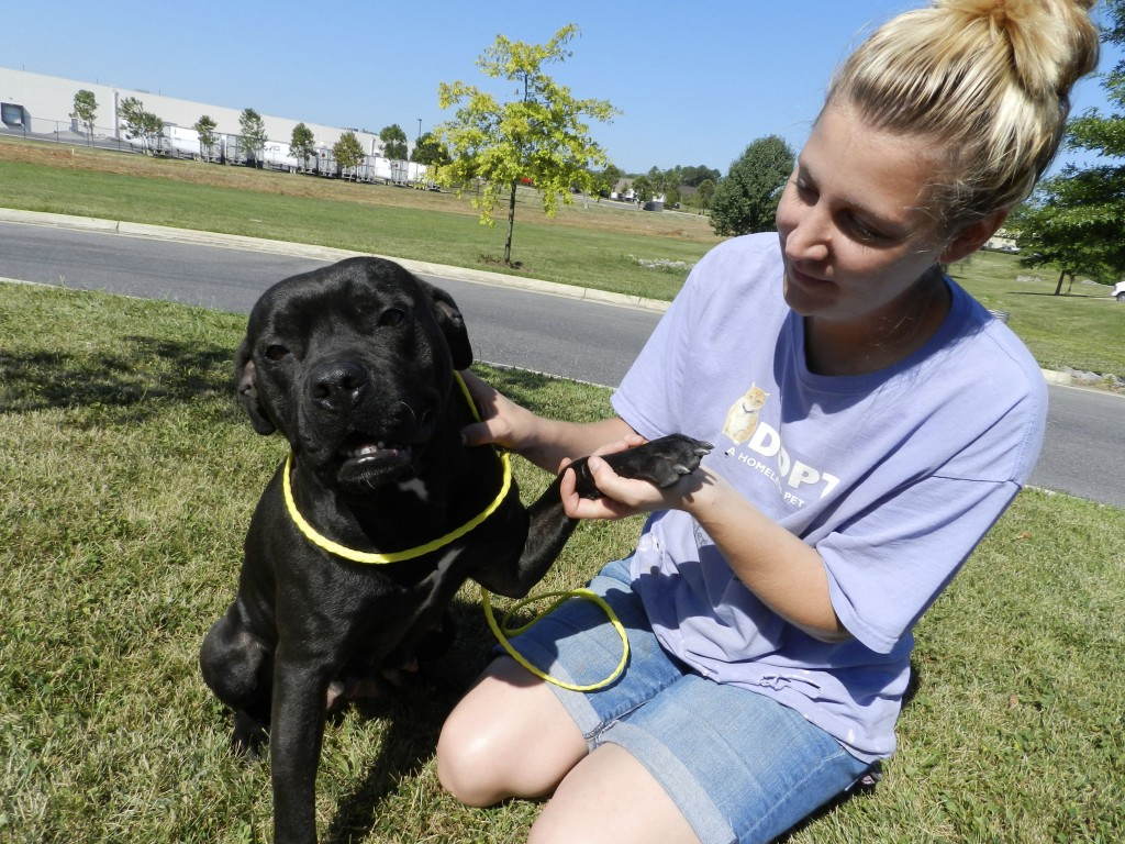 Raja demonstrates her ability to shake in exchange for a treat from animal caretaker Kamryn Dixon at the Frederick County's Esther Boyd Animal Shelter.  Rachel Mahoney/Daily