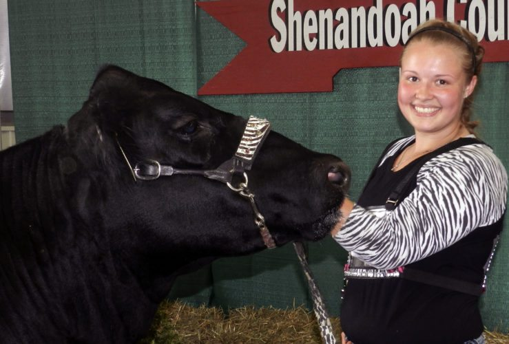 Hailey Shoemaker, of Edinburg, shown here with her heavy weight market steer Smoke 'Em, took home the Grand Champion Beef Showmanship award at this year's Shenandoah County Fair showmanship competition.  Kevin Green/Daily