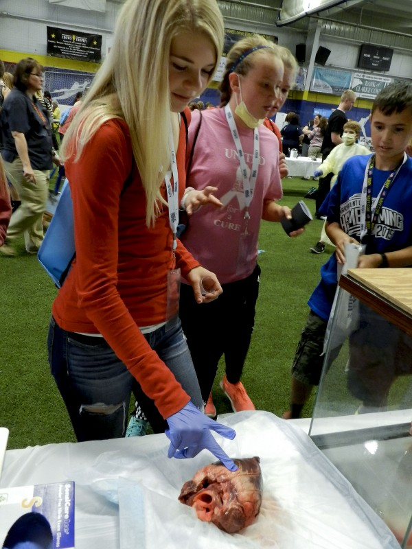 Faith Gansor, a seventh grade student at Frederick County Middle, prods a pig's heart at Valley Health's respiratory therapy booth at the Worlds of Work Career Expo in Winchester. Rachel Mahoney/Daily