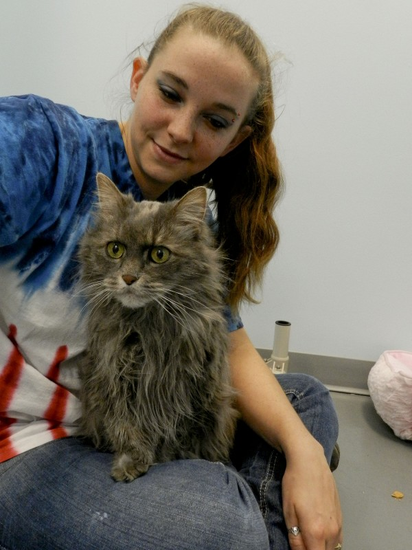 Blue spends some cuddle time with Winchester SPCA kennel staff member Stephanie Magbanua. Rachel Mahoney/Daily