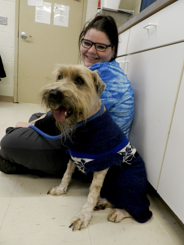 Tibetan terrier mix Finnegan, shaved clean and happily clad in his winter sweater to keep him warm, sticks by Humane Society of Warren County kennel attendant Dorothy Butler.  Rachel Mahoney/Daily