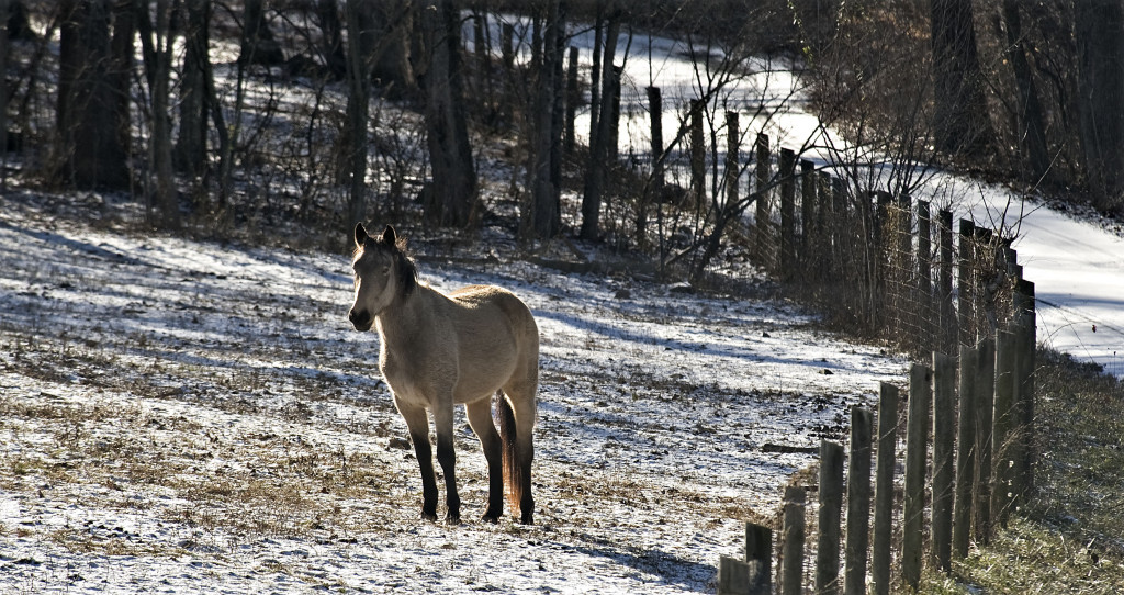 A horse stands in a light snow covered field in this scene off Remount Road in Warren County on Wednesday. Rich Cooley/Daily