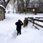 Preston Jaccard and miniature horse Flower walk through the snow in Saumsville in  Shenandoah County.  Photo courtesy by Samantha Jaccard