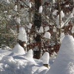 """Snow ghosts"" haunt some trees in Wardensville, West Virginia. Photo courtesy of George Crump"