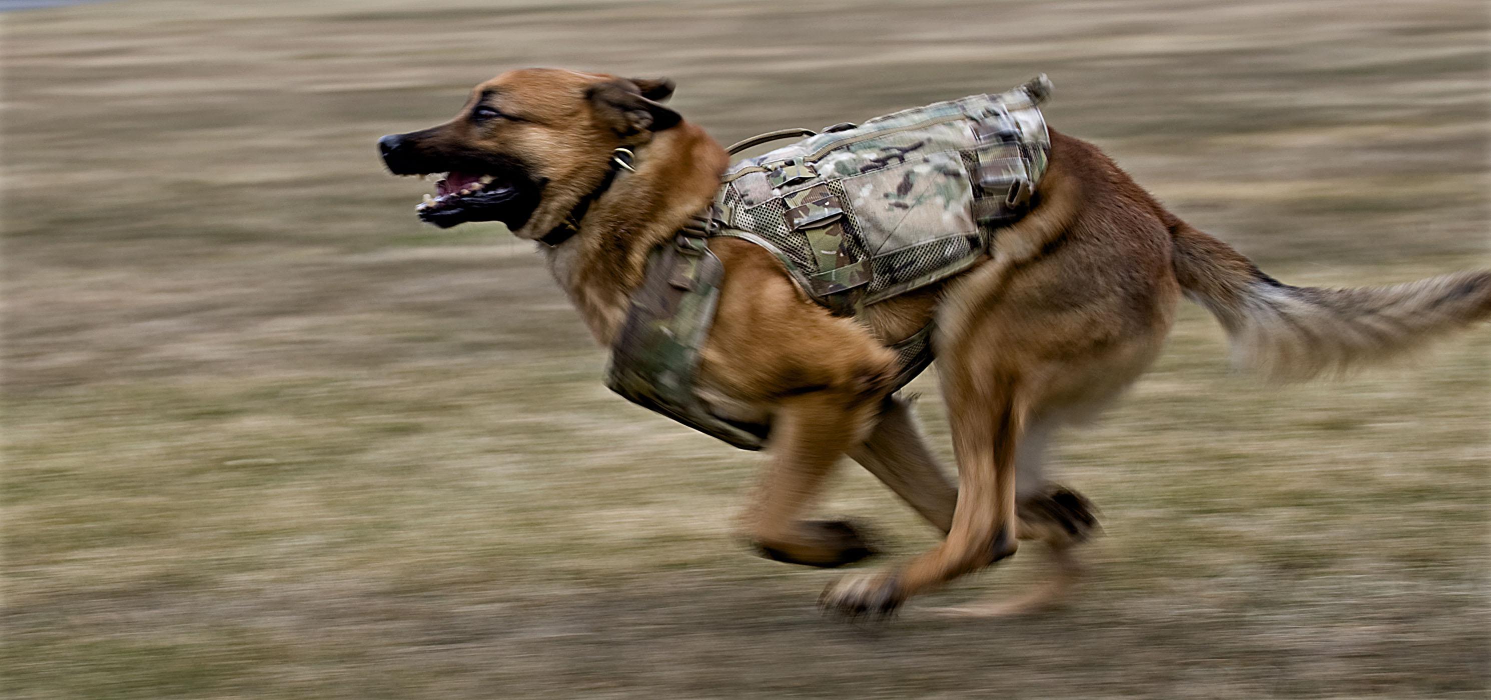 How To Make A Dog Life Vest