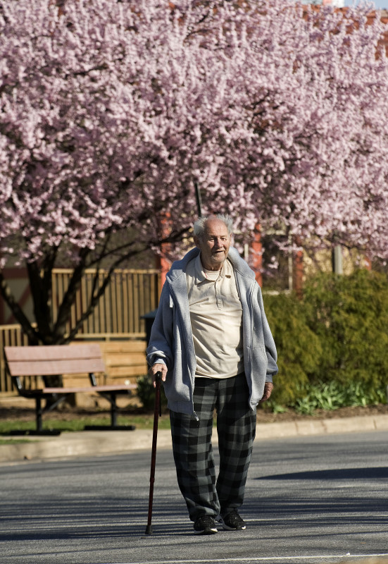 Raymond Carter Jr., 81, of Front Royal, enjoys a spring walk in front of a flowering tree outside the Front Royal-Warren County Visitors Center on East Main Street in Front Royal.  Rich Cooley/Daily